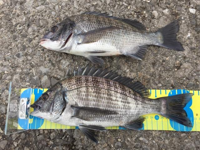 チニングに必要な道具と釣り方